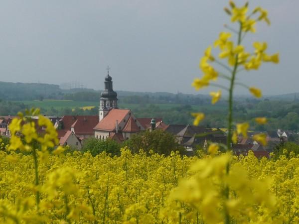 Gochsheim-Kirche-mit-Raps-bl-hend